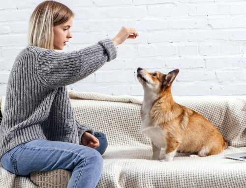 Training Your Dog To Have Impulse Control: What Is It?